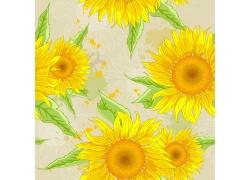 向日葵花纹背景