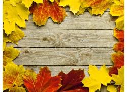 木板背景与梧桐叶背景
