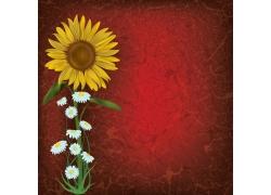 向日葵花朵与红色裂纹背景