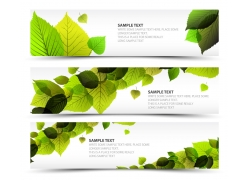 绿色叶子横幅背景