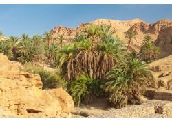 沙漠里的绿色植物