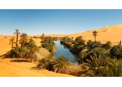 沙漠里的水渠与植物