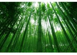 美丽竹林风景