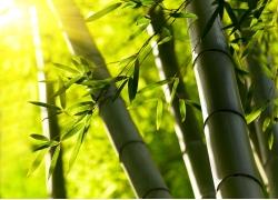 阳光与竹子