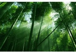 竹林里的阳光