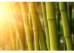 阳光与绿竹