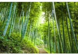 竹林里的道路