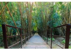 竹林里的阶梯