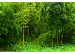 竹林风景摄影