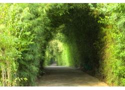竹林道路风景