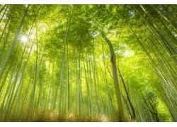 美丽竹子风景