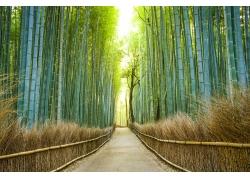 竹林小道风景