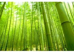 美丽绿竹风景