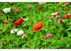 各种菊花鲜花摄影