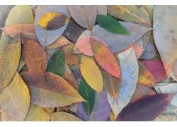秋天树叶背景