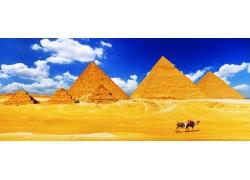 骆驼与金字塔