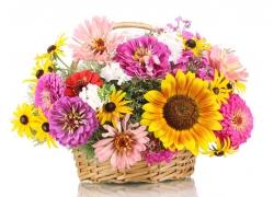 篮子里的菊花