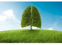 环保创意肺树