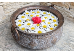 古代铜器里的菊花