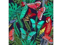 蝴蝶鹦鹉花卉背景