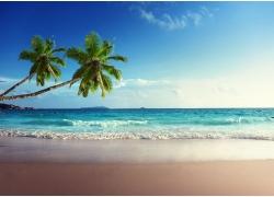 美丽海滩椰树风景