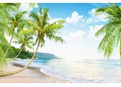 蓝天白云与椰树海滩风景