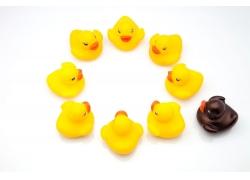 黄色的小鸭子