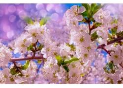 樱花梦幻光斑背景