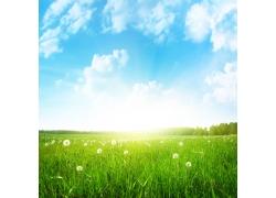 蒲公英草地与蓝天白云