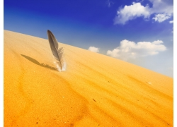 沙漠上的羽毛
