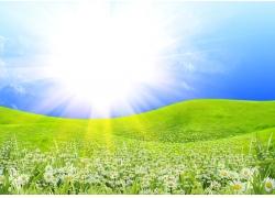 阳光与鲜花草地风景