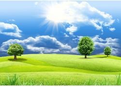 鲜花草地与蓝天白云