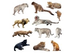可爱的猫科动物图片