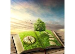 书本上的树木指南针