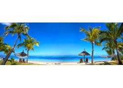 夏季海边的椰树