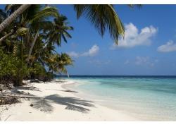 海滩椰树蓝天白云