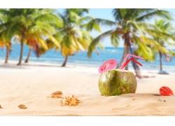 美丽沙滩椰子风景