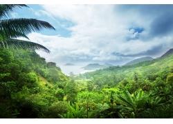 热带雨林风景摄影图片