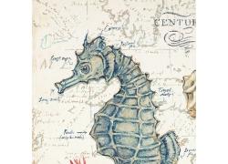 海马插画图片