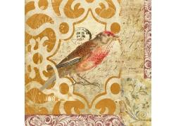小鸟插画油画图片