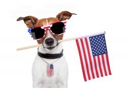 宠物狗嘴里咬着国旗