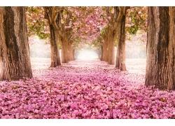 美丽樱花道路风景