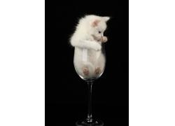 杯子里头的可爱白猫