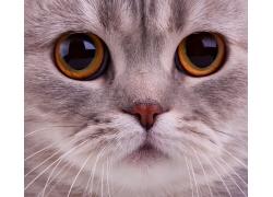 可爱小猫眼睛特写