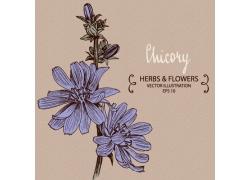 手绘盛开的蓝色花朵