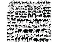 长颈鹿等动物剪影图片
