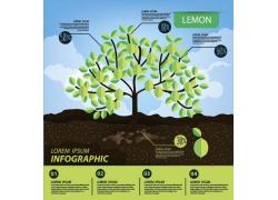有机植物绿色叶信息图表