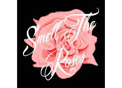 玫瑰花英文字母印花图案