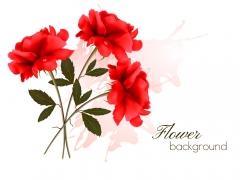 鲜艳的月季花