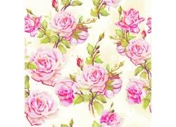 鲜艳的月季花背景